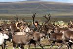 Cattura renna