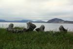 Whale bone alley luogo sacro di sepoltura1
