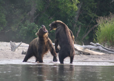 BROWN-BEARS