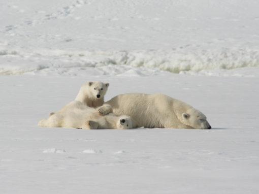 SETTEMBRE 2020: ALASKA IN AUTUNNO SPECIALE ORSI POLARI<span>ESAURITO</span>