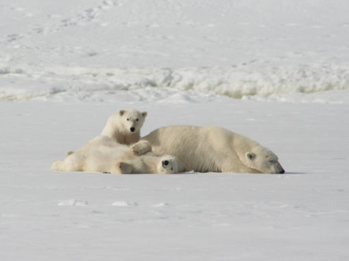 SEPTEMBER 2021: ALASKA IN AUTUMN POLAR BEARS SPECIAL<span>FULLY BOOKED</span>